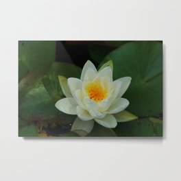 Lovely Lily Metal Print