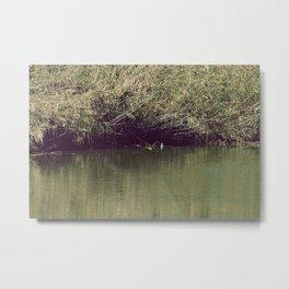 Nature went swimming IV Metal Print