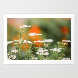 Cilantro Flowers Art Print