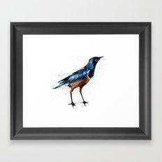 African Starling Framed Art Print