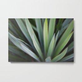 Yucca #6 Metal Print