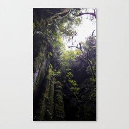 Winchead Cave Entrance III, Charleston, Buller, New Zealand Canvas Print