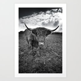 Rugged Highland Cattle Art Print