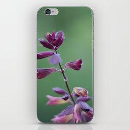 Salvia iPhone Skin