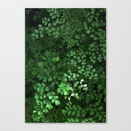 Maidenhair Canvas Print