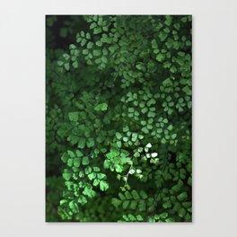 Maidenhair Canvas Print