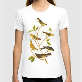 Little Tyrant Flycatcher, Small-headed Flycatcher, Blue Mountain Warbler, Bartram's Vireo, Short-leg T-shirt