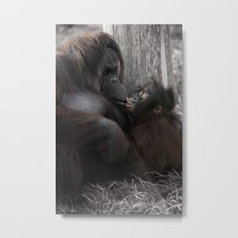 Baby Orangutan Kissing Her Mom Metal Print