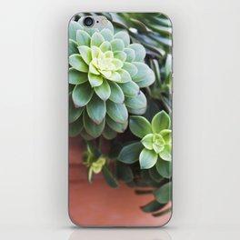 Succulent Loveliness iPhone Skin