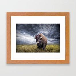 Plains Buffalo on the Prairie Framed Art Print