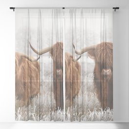 Hairy Scottish highlanders in a natural winter landscape. Sheer Curtain