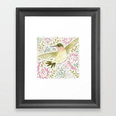 Calliope Hummingbird Framed Art Print
