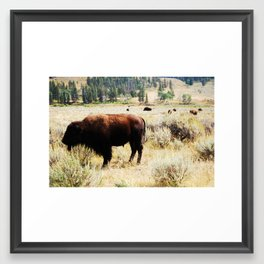 Bison in the Lamar Valley, Yellowstone National Park Framed Art Print