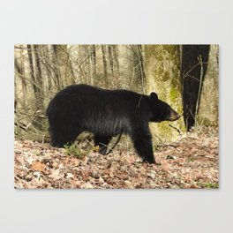 Grin and Bear It Canvas Print
