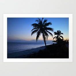 Palm Tree in Bahamian Sunset Art Print