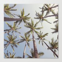 palm trees Canvas Prints featuring Palm Trees  by Bree Madden