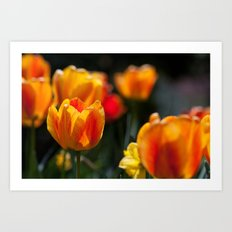Tulips in the Garden Art Print