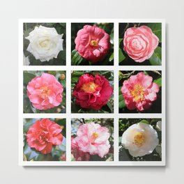 Beautiful Camellias Collage Metal Print