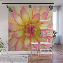 Pink and Yellow Dahlia Flower / Nature Macro Photography Wall Mural