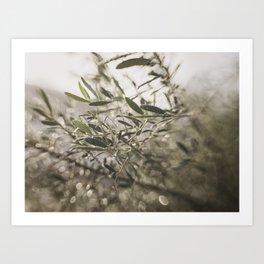 Olive Tree Leaves in the Mist Art Print