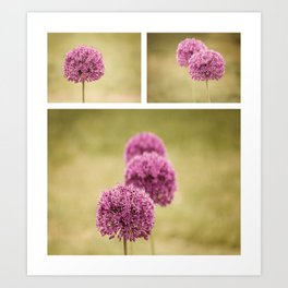 Flowers ~ Alliums Art Print