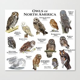 Owls of North America Canvas Print