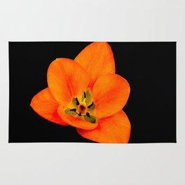 Bright Orange Tulip on Black Rug