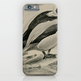 Vintage Print - Birdcraft: A Field Book of Birds (1897) - Old Squaw iPhone Case
