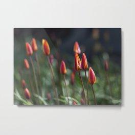 Fairy Tulip Buds Metal Print
