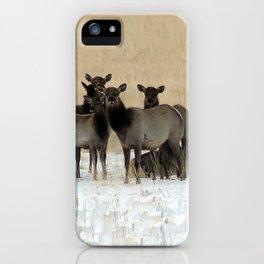 Cow Elk in a Bunch iPhone Case