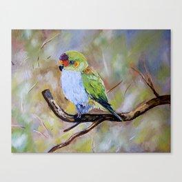 THE PURPLE CROWN LORIKEET  Canvas Print