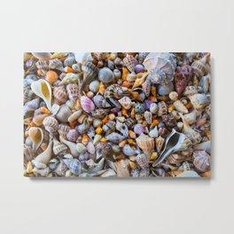 Seashell Collection Metal Print