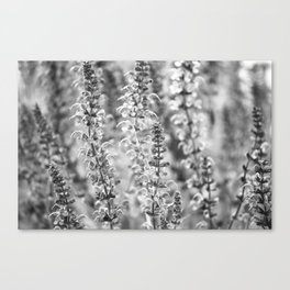 Flowers in Bloom, Black and White Canvas Print