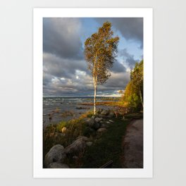 Tree in Lake Michigan Art Print