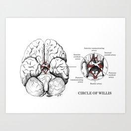 Circle of Willis Art Print