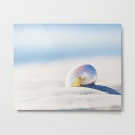 Pearl Nautilus Seashell Photography, Shell on Beach, Blue Coastal Photograph Metal Print