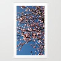 Blooming almond tree Art Print