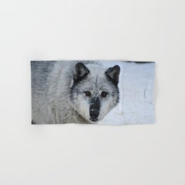 Lone wolf roams the Canadian Rockies Hand & Bath Towel
