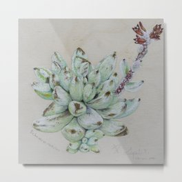 Lovely Succulent Plants Metal Print