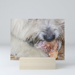Cute sweet furry dog eating a bone, lying on a wooden parquet floor Mini Art Print