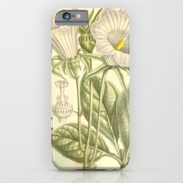 Flower 7472 ostrowskia magnifica iPhone Case