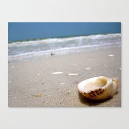 One brave little shell. Canvas Print