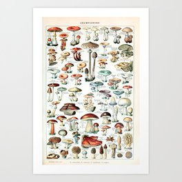 Adolphe Millot - Champignons pour tous - vintage poster Art Print