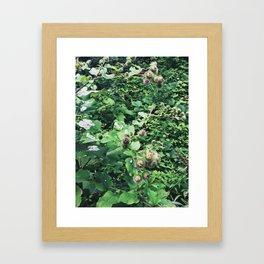 Burdock Framed Art Print