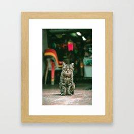 011 - KittyKat Framed Art Print