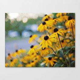 daisies Canvas Print