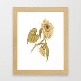 Vintage Sunflower Image T Framed Art Print