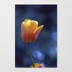 Tulip Solo 1259 Canvas Print