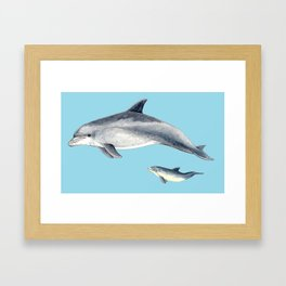 Blue Bottlenose dolphin Framed Art Print