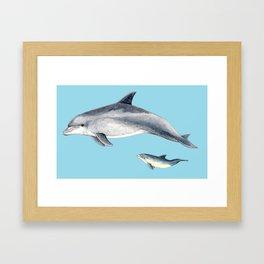 Blue Bottlenose dolphin Framed Art Print
